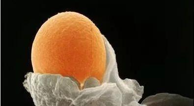 卵巢早衰做试管婴儿怀孕的几率大吗?-华夏试管网