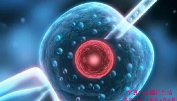 女性专家告诉你:女性不孕症必须知道的事-华夏试管网