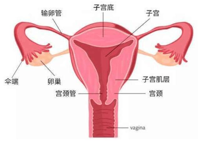 输卵管堵塞也许是女人这几个行为造成的,一定要小心-华夏试管网