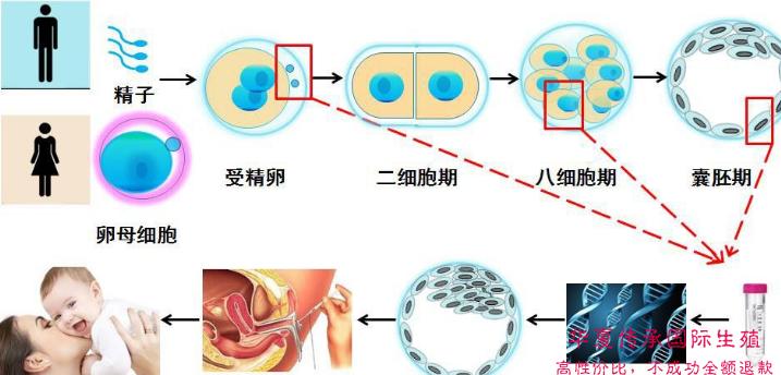 第三代试管婴儿核心——NGS技术解密!-华夏试管网