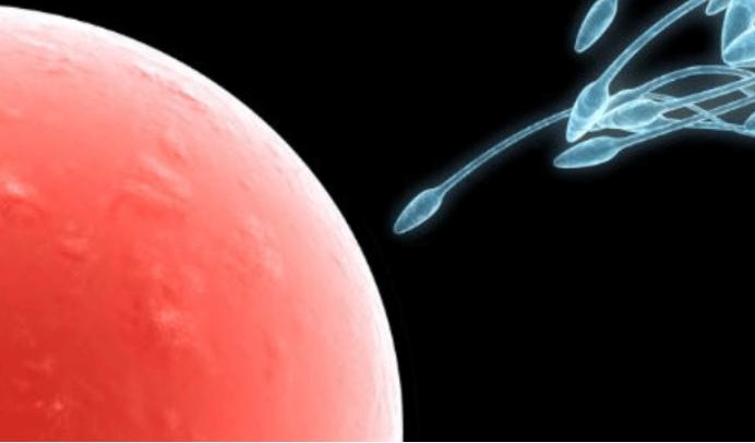 关于人工受精的这些事,你肯定不知道-华夏试管网