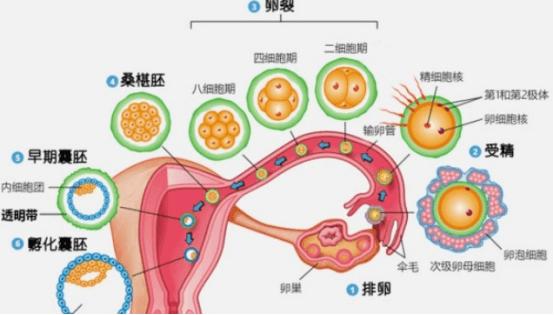 不孕不育的八种原因,第6种要特别注意!-华夏试管网